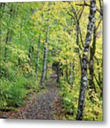 Old Rr Right-away Metal Print