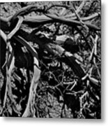 Old Sagebrush Metal Print
