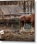 Old Stayer Metal Print