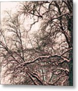 Old Tree 2 Metal Print