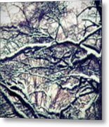 Old Tree 3 Metal Print