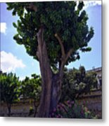Old Tree In Palermo Metal Print