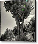 Old Tree In Sicily Metal Print