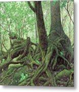 Old Tree Root Metal Print