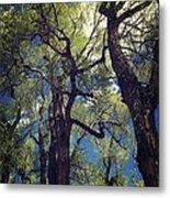Old Trees Metal Print