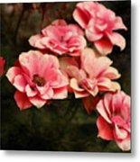 Old Victorian Fuchsia Pink Rose Metal Print