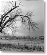 Old Winter Tree Grayscale Metal Print