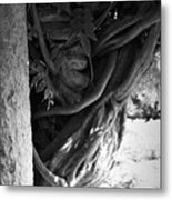 Old Wisteria 2 Metal Print