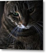 Ole Green Eyes Metal Print