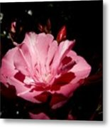 Oleander Bloom Metal Print