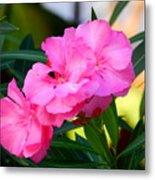Oleander Blooming Metal Print