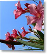 Oleander Flowers Wilting In The Brutal Florida Sun  Metal Print