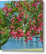 Oleander On Melbourne Harbor In Florida Metal Print