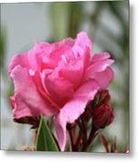 Oleander Splendens Giganteum 2 Metal Print