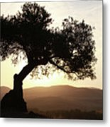 Olive At Sunset Metal Print
