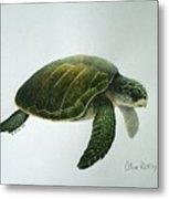 Olive Ridley Turtle Metal Print