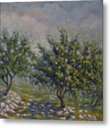 Olive Tree Field Metal Print