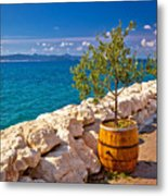Olive Tree In Barrel By The Sea Metal Print