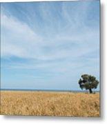 Olive Tree On The Wheat Field  Metal Print