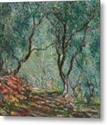 Olive Trees In The Moreno Garden Metal Print