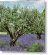 Olive Trees Of Provence Metal Print