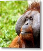 Ollie The Orangutang Metal Print