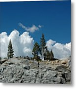 Olmsted Point Pine Rear View Metal Print