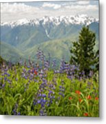 Olympic Mountain Wildflowers Metal Print