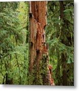 Olympic Rainforest #1 Metal Print