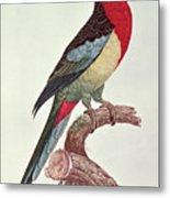 Omnicolored Parakeet Metal Print