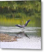 On A Stroll In The River Metal Print