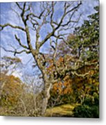 On A Verge Of The Dance. Metal Print