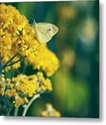 On A Warm Summer Day Metal Print
