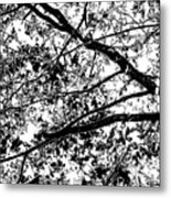 On And Limb And A Prayer Metal Print