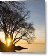 On Fire - Bright Sunrise Through The Willows Metal Print
