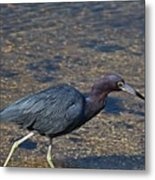 On The Banks Of The Backwater Metal Print