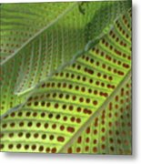 On The Dotted Lines Metal Print