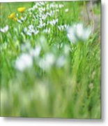 On The Garden Path Metal Print