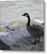 On The Lakefront Metal Print