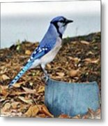 On The Look Out  Metal Print