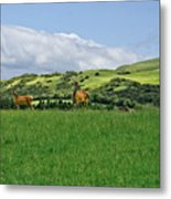 On The Look-out. Metal Print