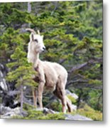 On The Lookout Metal Print