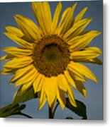 On the rise Metal Print