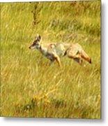 On The Run ... Montana Art Photo Metal Print