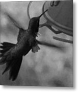 On The Wings Of A Hummingbird Metal Print