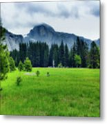 On The Yosemite Valley Floor Metal Print