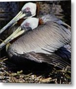 On Their Nest Metal Print