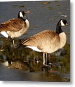 On Thin Ice Metal Print
