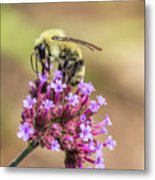 On Top Of The World - Bee Style Metal Print