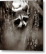 On Watch - Sepia Metal Print